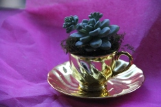 Myer Department Store Florist Bourke St, Teacup Succulent $35